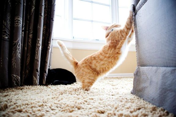 Kattepsykologi: Kradser din kat også i sofaen?